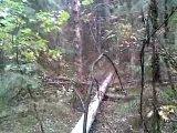 Так я в лесу собираю грибы!